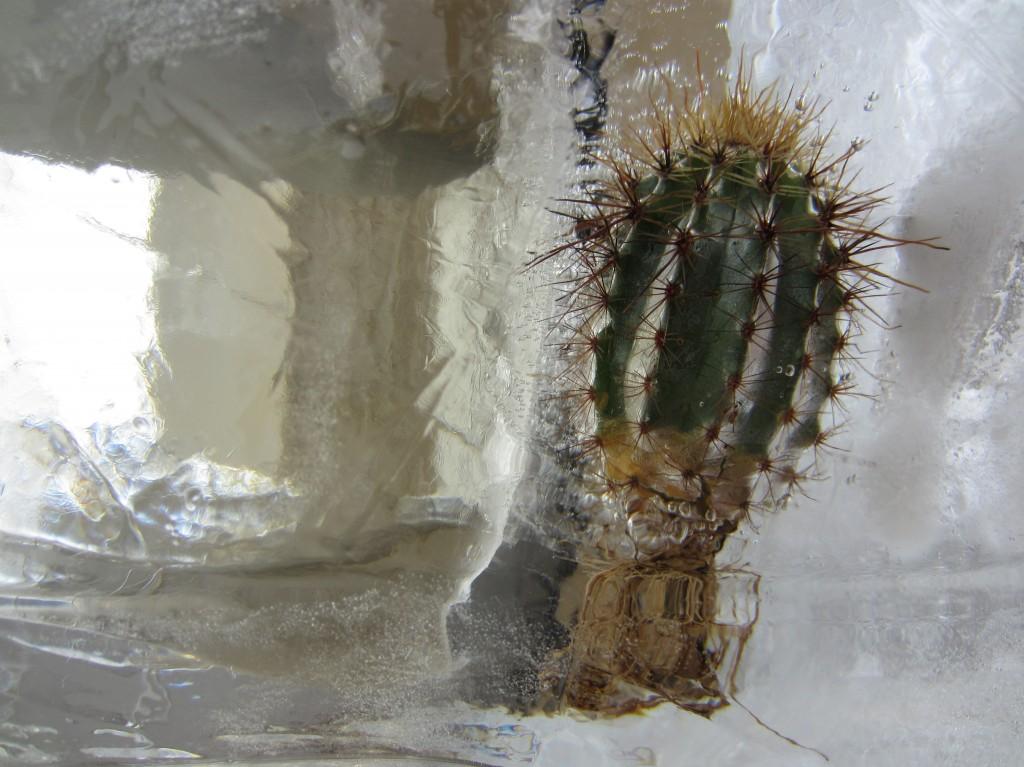 Cactus, 2013